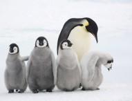WWF stellt animalische Jahresbilanz für den Artenschutz vor