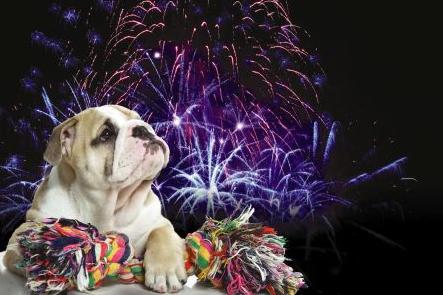 Photo of So bringt die Silvesterknallerei keinen Stress für Haustiere