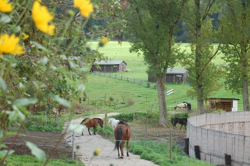 Photo of Het Betere BoerenBed  mit neuen Investoren