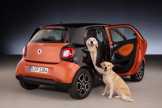Bild von Ideal für Hunde: smart forfour mit readyspace Sitzen