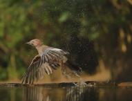 LUMIX G70: Wildlife-Fotografie wie bei den Profis