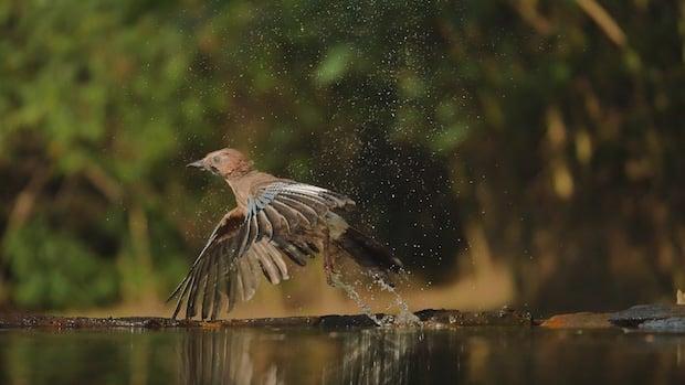 Photo of LUMIX G70: Wildlife-Fotografie wie bei den Profis