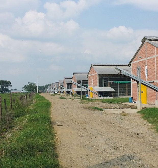 Photo of WELTEC BIOPOWER baut 800-Kilowatt-Biogasanlage in Kolumbien