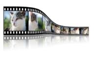 Präsentationsvideos: Eine gute Möglichkeit der Unternehmensvorstellung