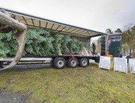 CharterWay liefert royalen Weihnachtsbaum für die Queen