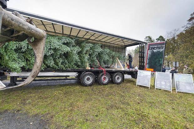 Photo of CharterWay liefert royalen Weihnachtsbaum für die Queen