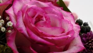 Blumensträuße online kaufen: Fachhändler im Preisvergleich
