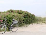 Studie: E-Bikes sorgen für ein Plus an Bewegung