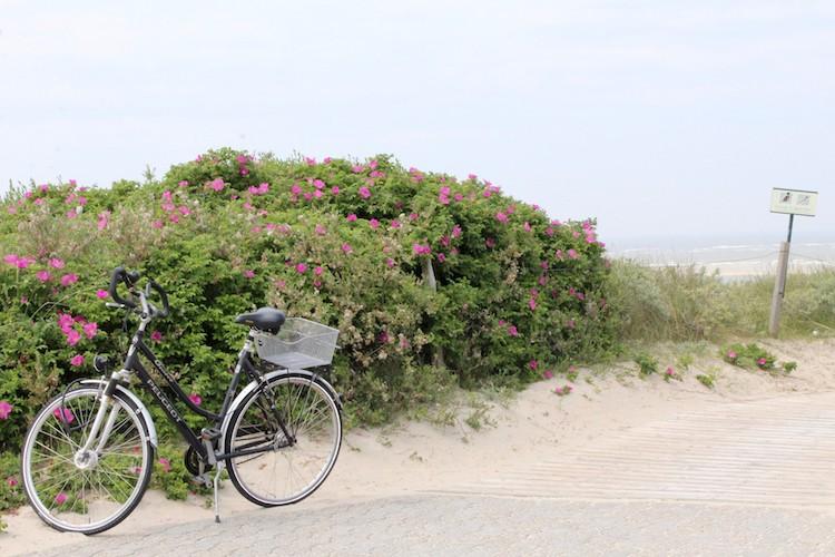 Photo of Studie: E-Bikes sorgen für ein Plus an Bewegung