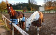 Patura Zäune – die optimale Lösung für die Tierhaltung