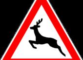 Die unterschätzte Gefahr Wild