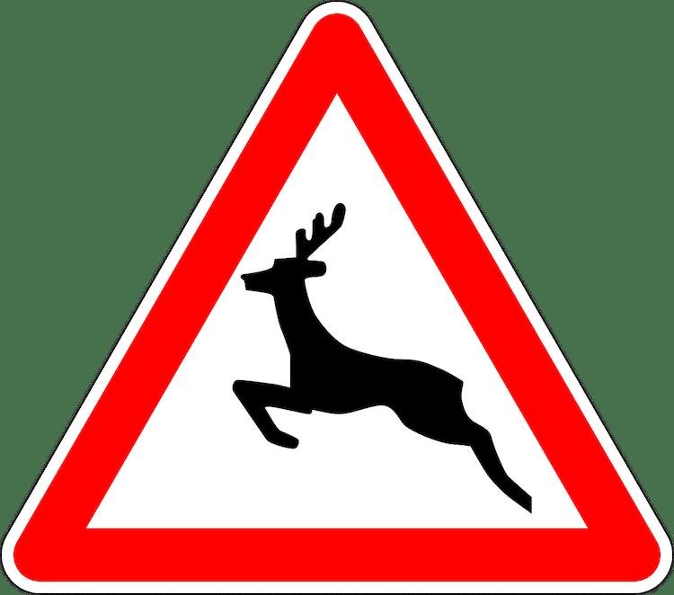 Photo of Die unterschätzte Gefahr Wild