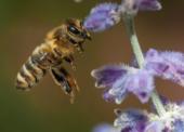Tipps für den Schutz von Wildbienen