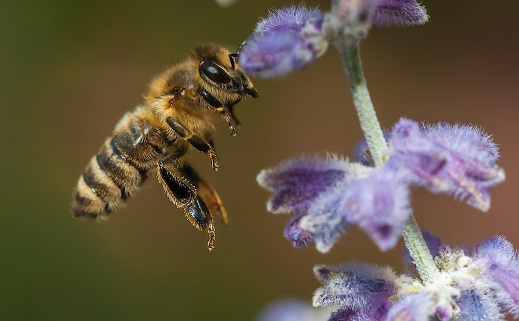 Bild von Tipps für den Schutz von Wildbienen
