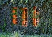 Grüne Fassaden dank positivem Umweltnutzen weiter im Aufwind