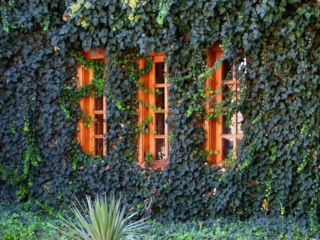 Photo of Grüne Fassaden dank positivem Umweltnutzen weiter im Aufwind