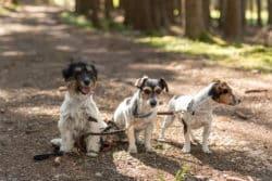 Nicht in jedem Bundesland ist eine Hundehaftpflicht ein muss.
