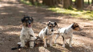 Photo of Darum ist eine Hundehaftpflicht mehr als nur eine gute Idee