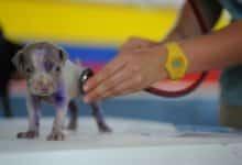 Photo of Meldepflicht bei Corona-Infektion von Haustier