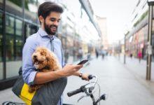 Mit der richtigen IT-Infrastruktur klappt auch das Arbeiten im Homeoffice. Das Mobiltelefon gehört dazu.