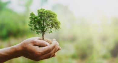Es gibt die verschiedensten Mittel und Wege, mit der Problematik der Nachhaltigkeit im Alltag umzugehen.